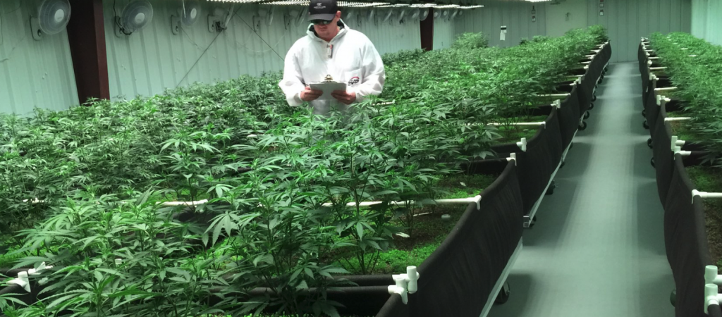 On a high: Retired UFC fighter Cantwell thriving in cannabis industry
