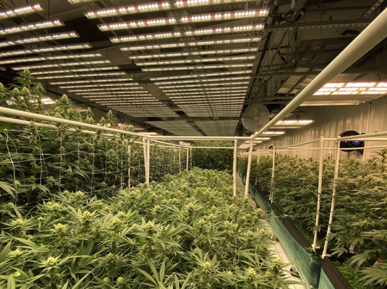 Green Life Productions: Growing for Nevada
