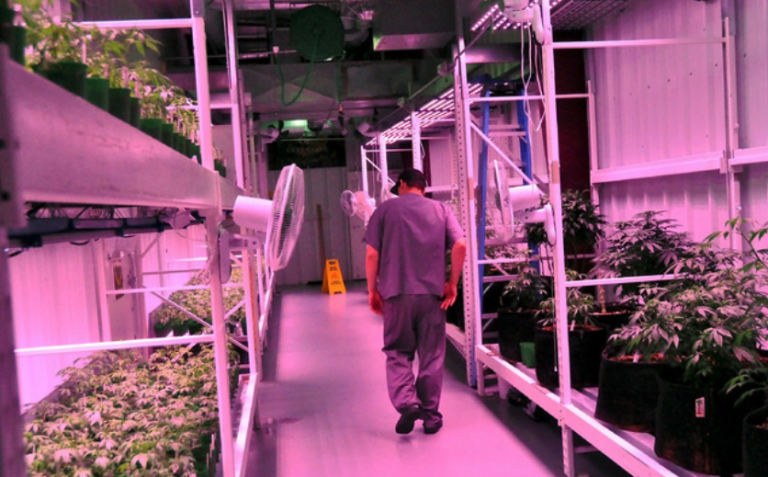 FOHSE Selected as Exclusive Lighting Partner for Cannabis Cultivator Green Life Productions